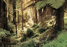 Sherbrooke-Forest1-web1